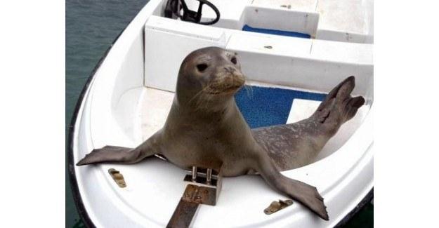 Tekneye sığınan Akdeniz foku görenleri şaşırttı
