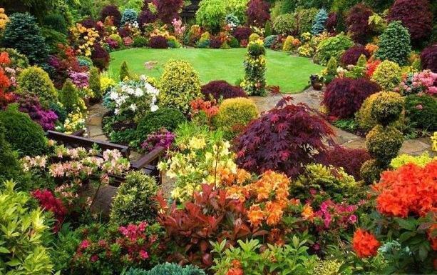 Dünyada kaç çeşit bitki türü var? İşte cevabı!