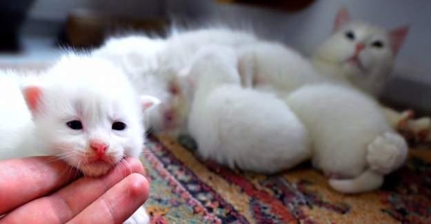 4 Ekim Dünya Hayvanları Koruma Günü etkinliği düzenlenecek