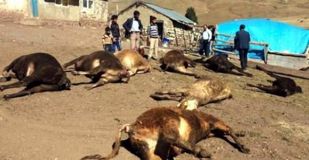 Erzurum'da ahırda yangın çıktı:8 inek telef oldu