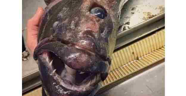 Rus balıkçı hayrete düşüren o balıkları paylaştı