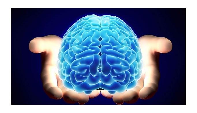Bilim insanları laboratuvarda mini beyin üretti