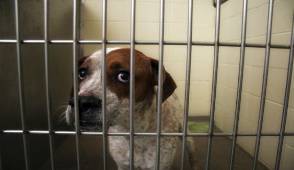 Petshoplarda Kedi Köpek satışı yasaklanıyor