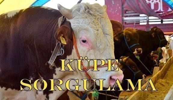 Küpe Sorgulama - Kurbanlık hayvanların küpeleri nasıl sorgulanır?