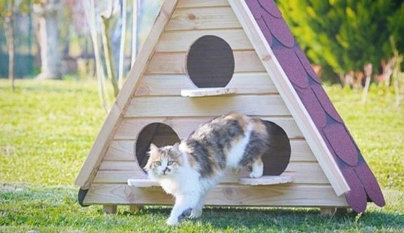 Sevimli Dostlarımız Kediler İçin Yapmamız Gerekenler