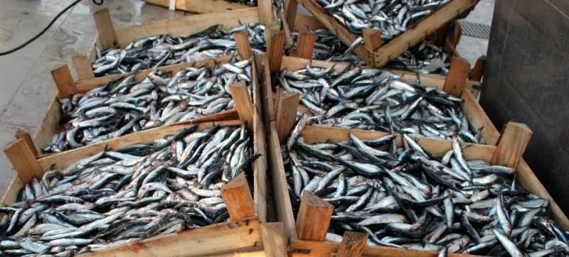 Balıkçılar uyardı: fiyatlar her an yükselebilir