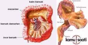 İnsanda yeni bir organ bulundu