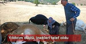 İneklerine yıldırım düşen çifte 3 inek gönderildi