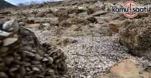 Barajdan sular çekilince istilacı midyeler ortaya çıktı