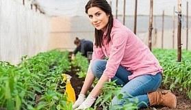2017 Genç çiftçiye hibe desteği - Bakan Çelik açıkladı