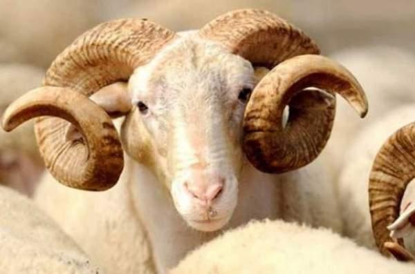 Usulsüz Hayvan Kesimine 2 bin 511 TL Para Cezası