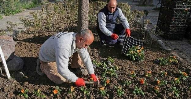 Karşıyaka'ya 200 bin yeni çiçek dikildi!