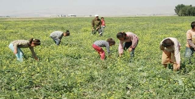 Mevsimlik işçilerinin çocukları eğitimlerinden geri kalmayacak