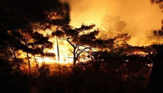 Kazdağları'nda 20 hektarlık alan kül oldu!