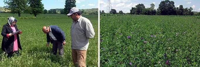 Kocaeli Belediyesinden çiftçilere, yüzde elli hibeli tohum desteği!