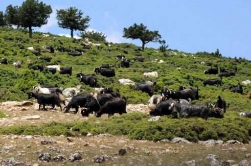 Bitlis'te hayvan otlatma kavgası - 2 ölü, 4 yaralı