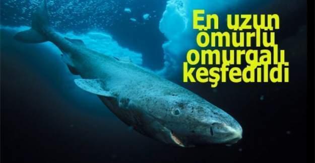 En uzun ömürlü omurgalı ödülü'nü Grönland köpekbalığı aldı!!!