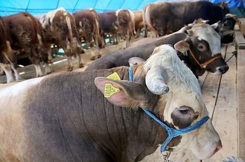 veremli kurban alarmı! diğer etlere de bulaştıysa!!!