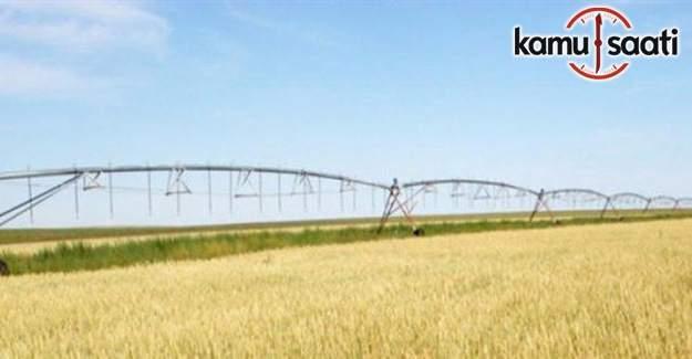 Yeni 4 çeşit tahıl toprakla buluşacak