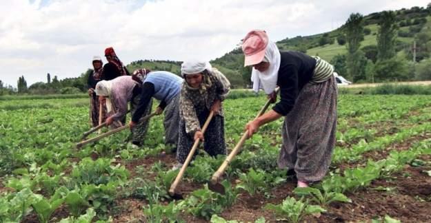 Çiftçilere 640 milyon TL'lik destek yarın ödenecek