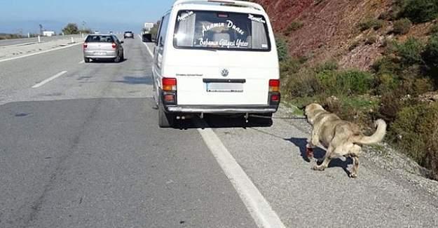 Köpeği minibüse bağladı, ayakları kanasa da sürükledi
