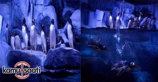 İstanbul kapılarını ''kutup penguenleri'' için açtı