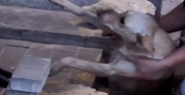 Rusya'da kaldırım taşlarının altından köpek çıktı