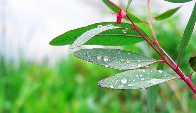 Nisan yağmurlarının bilinmeyen faydası
