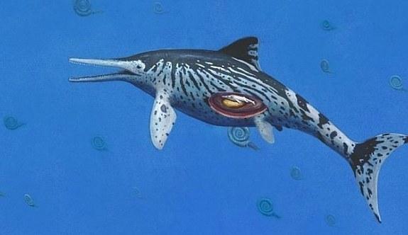 200 milyon yıllık fosilin karnında doğmamış bebek bulundu