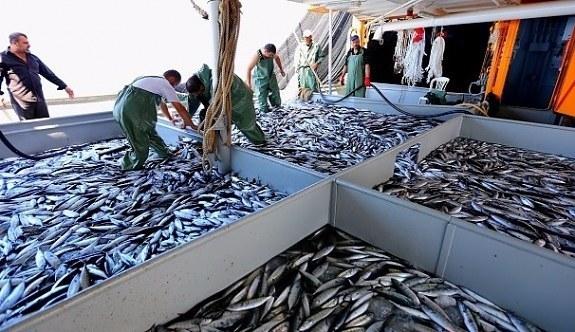 Türkiye'den Çin'e balık ihracatı! İşte o balıklar...