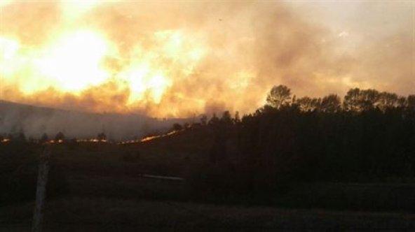 Kars'ta askeri bölgede orman yangını