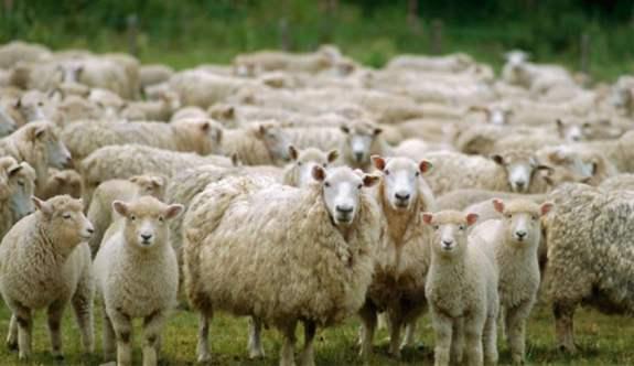 Beştepe'de Çiftçiler Buluşması - 300 Koyun artı maaş detayları belli oluyor