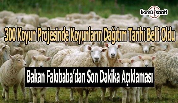 300 koyun projesinde koyunların dağıtım tarihi belli oldu