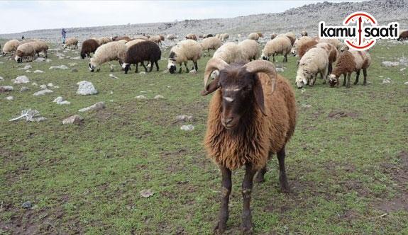 '300 koyun projesi' göçleri durduracak mı?