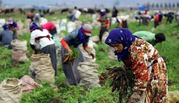 Tarım İşçisinin Ücretleri Arttı