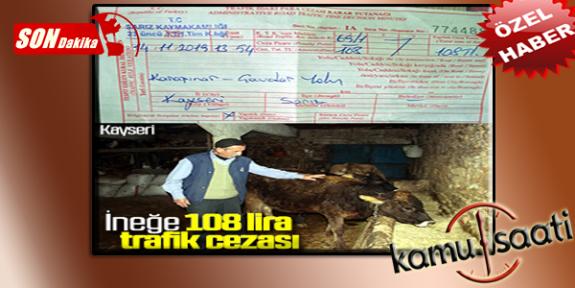 Kayseri Sarız İlçesinde İneğine 108 Lira Ceza Kesildi | İneğe Trafik Cezası