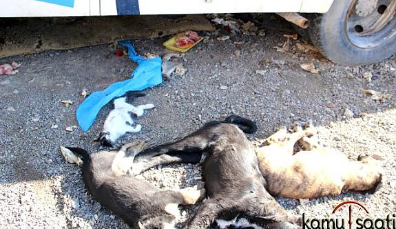 İzmir Bornovo'da  Canice Hayvanları Katlettiler !!
