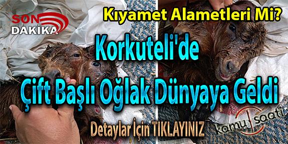 Antalya Korkuteli'de Çift Başlı Oğlak Dünya'ya Geldi İŞTE Detaylar!!!