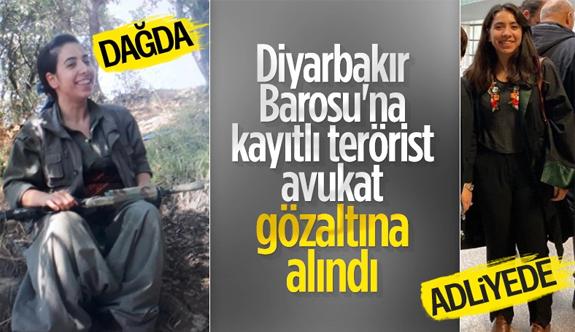 Kırmızı kategorideki teröristin sağ kolu Diyarbakır barosu avukatı çıktı