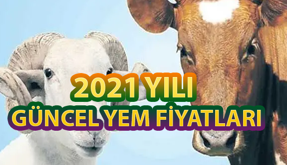 Büyükbaş Hayvan Yemi Fiyatları 2021 (GÜNCEL)