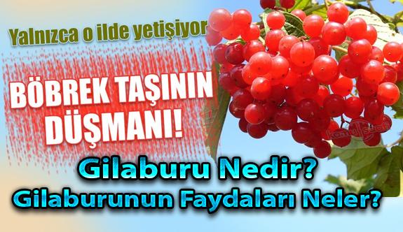 Kayseri'de yetişen o bitki yani Gilaburu suyu,bağışıklığı da güçlendiriyor,hastalıklarla da savaşıyor!