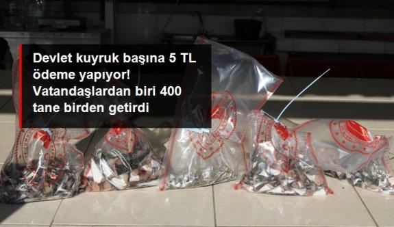 Kuyruk başına 5 TL ödeme yapılıyor! Antalyalı balıkçı, 400 adet balon balığı kuyruğuyla geldi