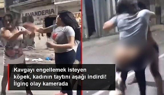Sokak köpeği, kavga eden kadının taytını aşağı indirdi! iŞTE O anlar anbean kameraya yansıdı