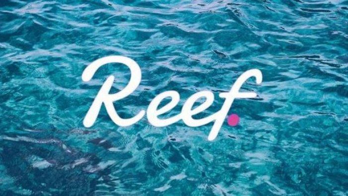 Reef coin nedir, nasıl alınır? REEF coin ne zaman çıktı? Kurucusu kim?