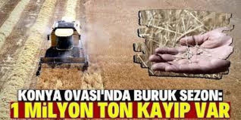 Konya Ovası'nın hububatta ürün kaybı 1 milyon ton