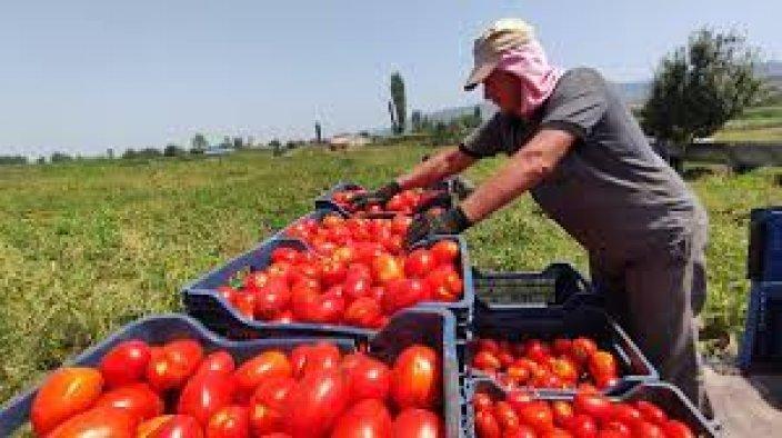 Tarladaki ucuz domates, markete girince cep yakıyor