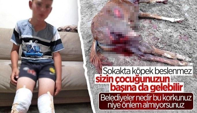 Eskişehir'de sokak köpekleri, yarış atlarını parçalayıp vatandaşlara saldırıyor