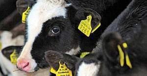 'Küpe Sorgulama Web Sayfası' açıldı - Hayvan sorgulama
