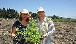 Mucize bitki Moringa, Türkiye'de ilk kez yetişecek