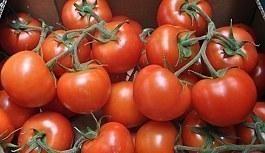 Rusya'dan domates ihracatı için heyet geliyor